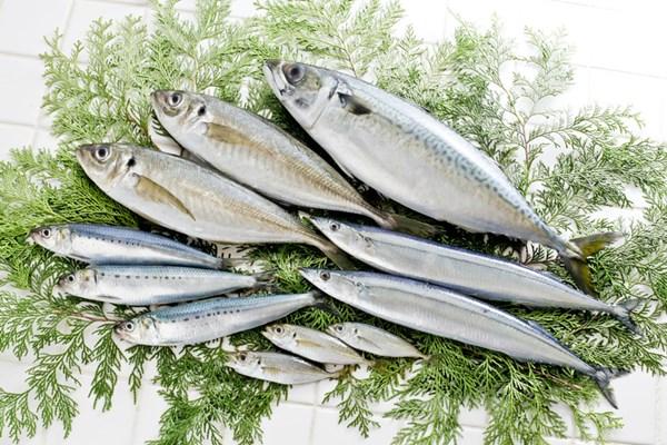 EPA・DHAが豊富な青魚(イワシ・サバ・サンマ・アジ)