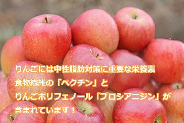 りんごには中性脂肪対策に重要な栄養素、食物繊維のペクチンとりんごポリフェノールのプロシアニジンが含まれています。